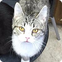 Adopt A Pet :: Maddie - Norwich, NY