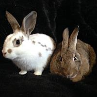 Adopt A Pet :: Harper & Ronan - Watauga, TX