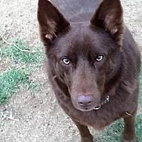 Adopt A Pet :: DORA - Riverside, CA