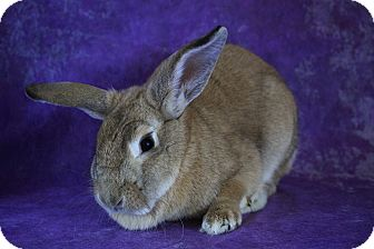 Lop-Eared Mix for adoption in Wilmington, North Carolina - Peaches