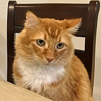 Adopt A Pet :: Oliver 09-3604 (Whiskie) - Fremont, CA