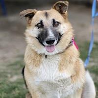 German Shepherd Dog Mix Dog for adoption in Fresno, California - Kate