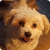 Adopt A Pet :: Patty - Detroit, MI