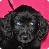 Adopt A Pet :: **HOPE** meet July 8th! - Mukwonago, WI