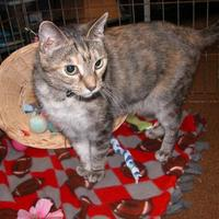 Adopt A Pet :: Lilly - Salem, OH