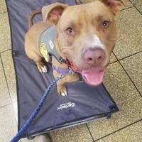 Adopt A Pet :: Meka - Fresno, CA