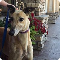 Adopt A Pet :: Neytiri - Coon Rapids, MN