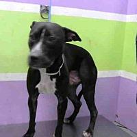 Adopt A Pet :: ASIA - Houston, TX