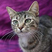 Adopt A Pet :: Kimmie - Chattanooga, TN