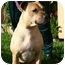 Photo 3 - American Pit Bull Terrier Mix Dog for adoption in Berkeley, California - Pebbles
