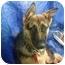 Photo 2 - German Shepherd Dog Dog for adoption in El Cajon, California - shepherd