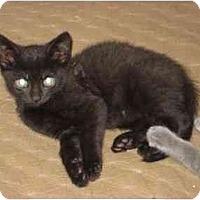 Adopt A Pet :: Tito - New York, NY