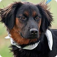 Adopt A Pet :: Zack - Scotland Neck, NC
