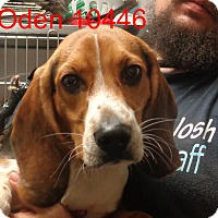 Adopt A Pet :: oden - Greencastle, NC