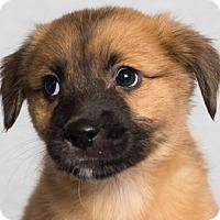 Adopt A Pet :: Robyn - Minneapolis, MN