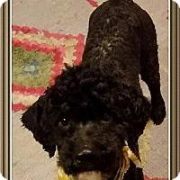 Adopt A Pet :: Indian Mills NJ - Chico - New Jersey, NJ