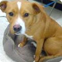 Adopt A Pet :: Cinamon - Kendall, NY