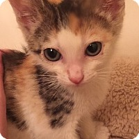 Adopt A Pet :: Piper - Encinitas, CA
