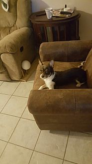 Terrier (Unknown Type, Small) Mix Dog for adoption in Katy, Texas - skippy