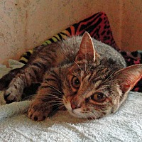 Adopt A Pet :: Ziva - St. Johnsville, NY