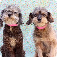 Adopt A Pet :: Bug and Lily - Waldorf, MD