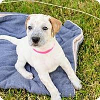 Adopt A Pet :: Sophie - Alameda, CA