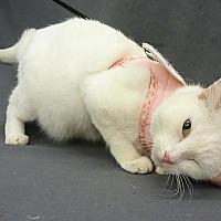 Adopt A Pet :: Mia - League City, TX