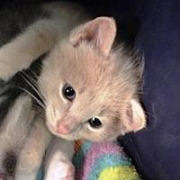 Adopt A Pet :: Merlin - Edmonton, AB