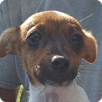 Adopt A Pet :: John - Colonial Heights, VA