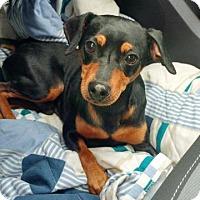 Adopt A Pet :: Liam - Valparaiso, IN