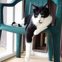 Adopt A Pet :: Stan - Belleville, MI