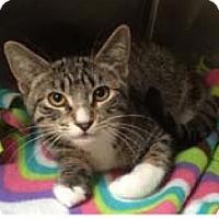 Adopt A Pet :: Felicity - Princeton, MN