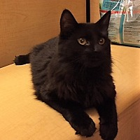 Adopt A Pet :: Kona - Warrenton, MO