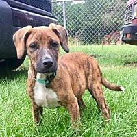Adopt A Pet :: Timber - CRANSTON, RI