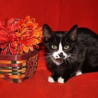 Adopt A Pet :: Priscilla - Marietta, OH