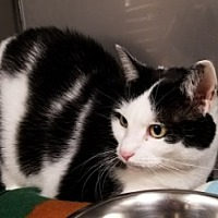 Adopt A Pet :: Nettie - Middletown, CT