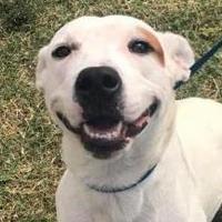 Adopt A Pet :: Bailey - Oklahoma City, OK