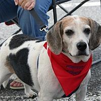 Adopt A Pet :: Rudy Pelle - Waldorf, MD