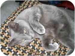 Domestic Shorthair Cat for adoption in Strathmore, Alberta - Casper