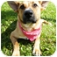 Photo 1 - Shepherd (Unknown Type) Mix Dog for adoption in Detroit, Michigan - Mia-Adopted!