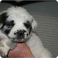 Adopt A Pet :: Juneau - Mesa, AZ