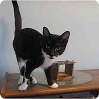Adopt A Pet :: Rebecca - Montreal, QC