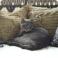 Adopt A Pet :: NINA  - 2014 - Hamilton, NJ