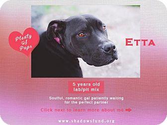 Labrador Retriever Mix Dog for adoption in Lompoc, California - Miss Etta James