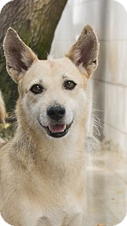 Whippet/Wirehaired Fox Terrier Mix Dog for adoption in Toronto, Ontario - Shayla