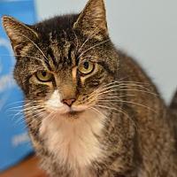 Adopt A Pet :: Tom Tom170470 - Atlanta, GA