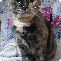 Adopt A Pet :: Sweet Pea - Witter, AR