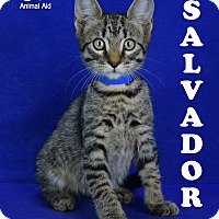 Adopt A Pet :: Salvador - Carencro, LA