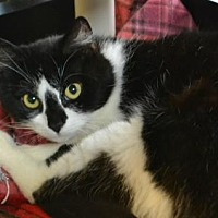 Adopt A Pet :: Phoebe - Akron, OH