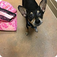 Adopt A Pet :: Hermin - Philadelphia, PA